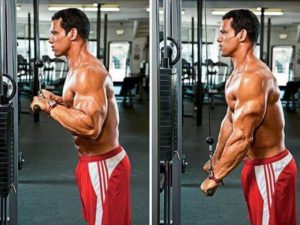 Triceps cable pushdown